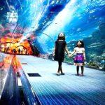 تماشای دنیای زیر آب در آکواریوم کیش