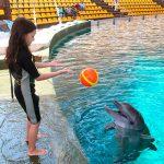 تماشای دلفین های باهوش در دلفیناریوم کیش